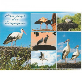 Postcard In the Land of Storks