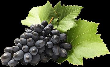Découvrez notre sélection de Verres et Vins Fins d'Alsace